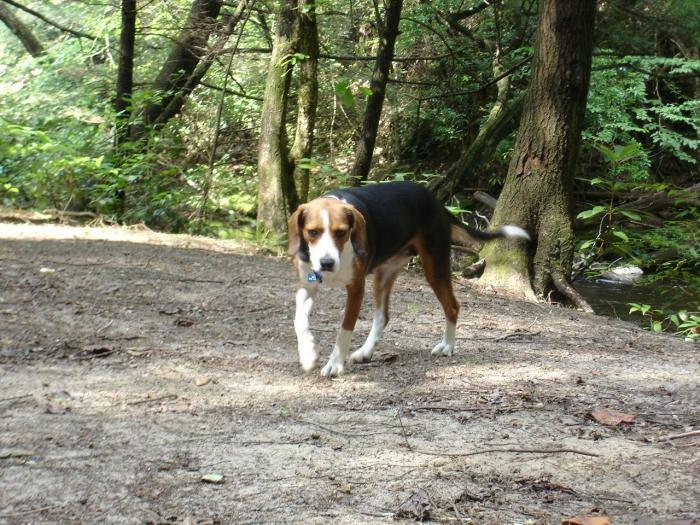 My Hiking Buddy