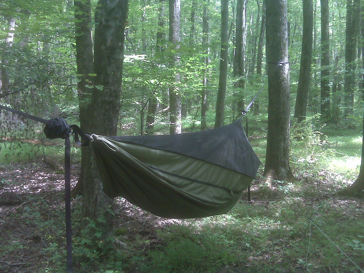 1st hang in Warbonnet Blackbird