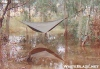 swamp by dpage in Hammocks