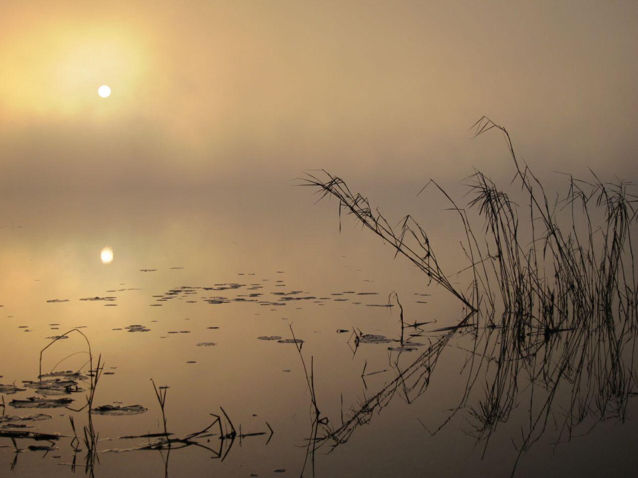 Buck Lake Ocala Nf
