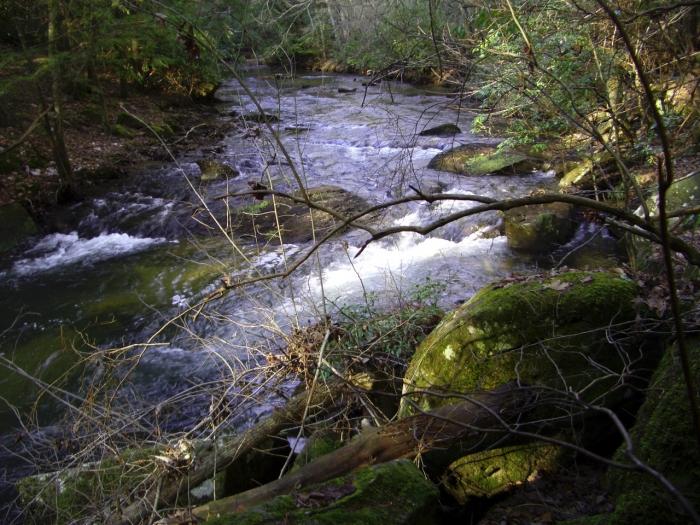BSF Laurel Creek trip