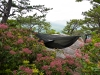 Blackbird Overlooking Grandfather Mountain by Art Vandelay II in Hammock Landscapes