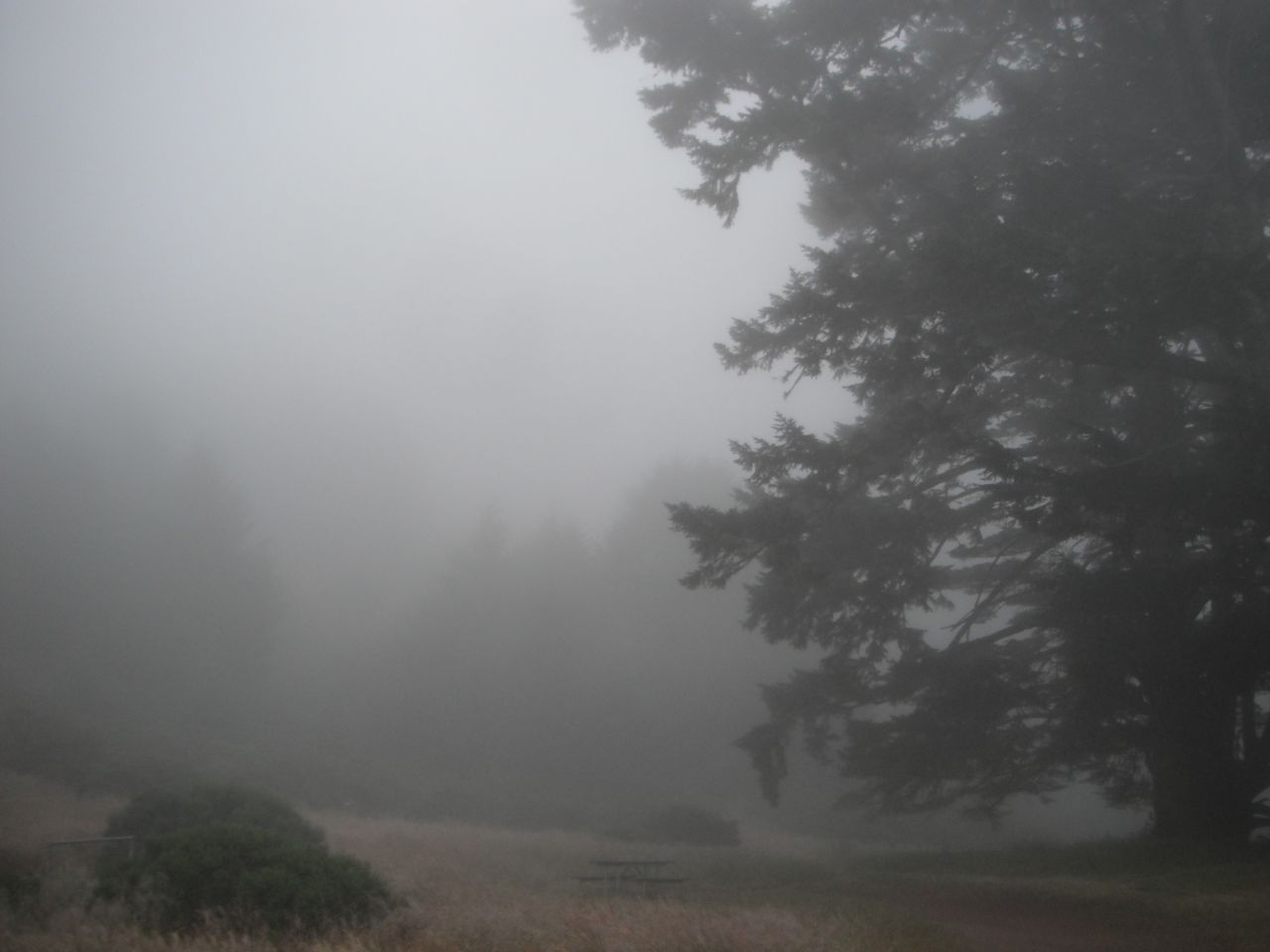 Sky Camp Fog