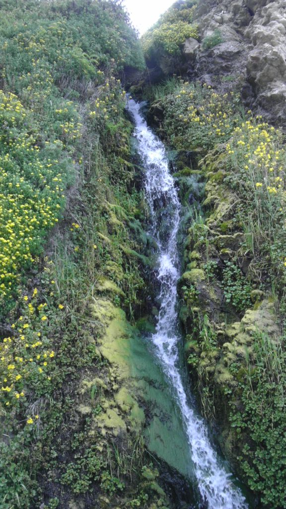 Waterfall Flanked By Wild Flowers