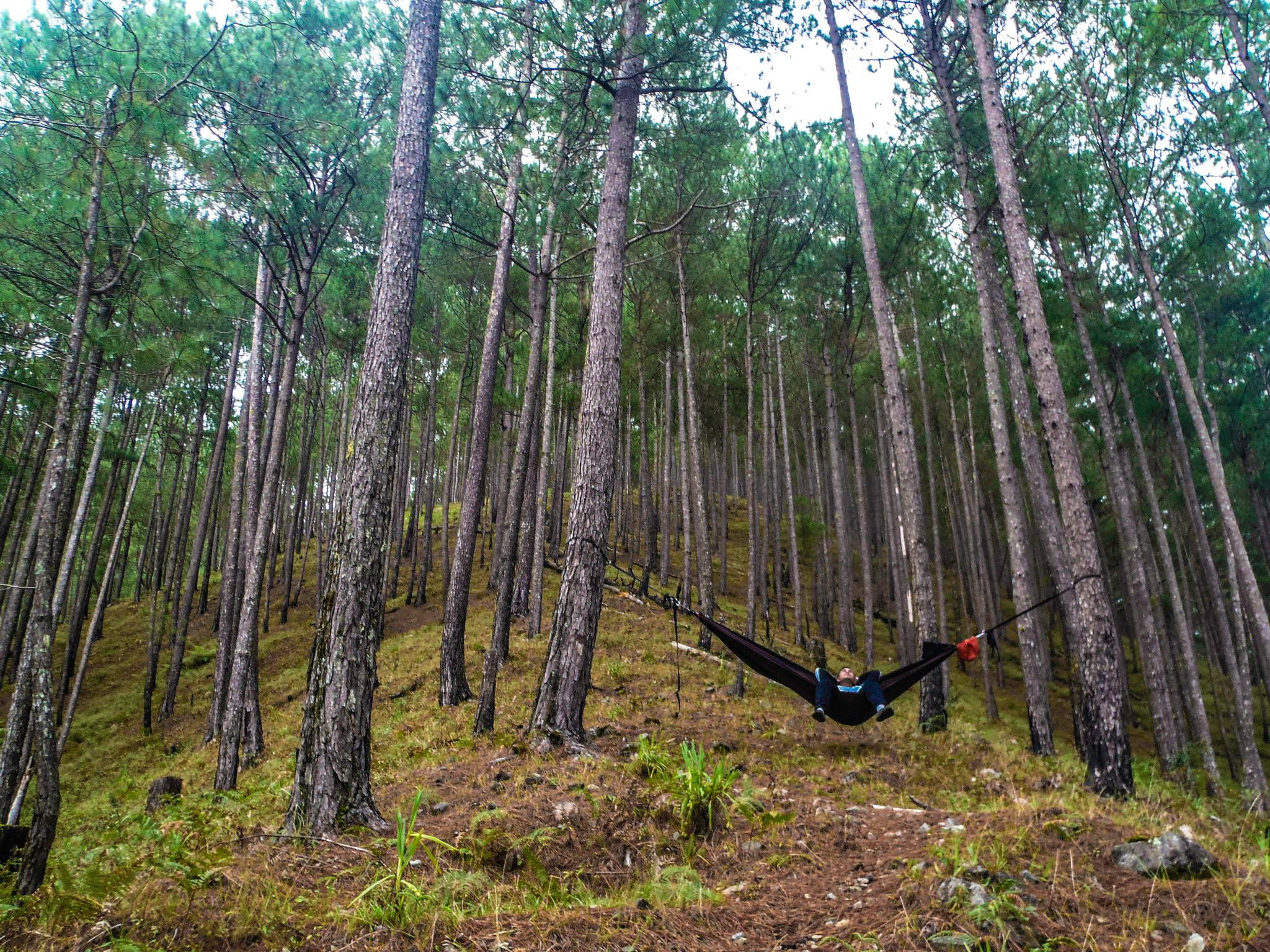 Pine Forest Hang 3 - Philippines