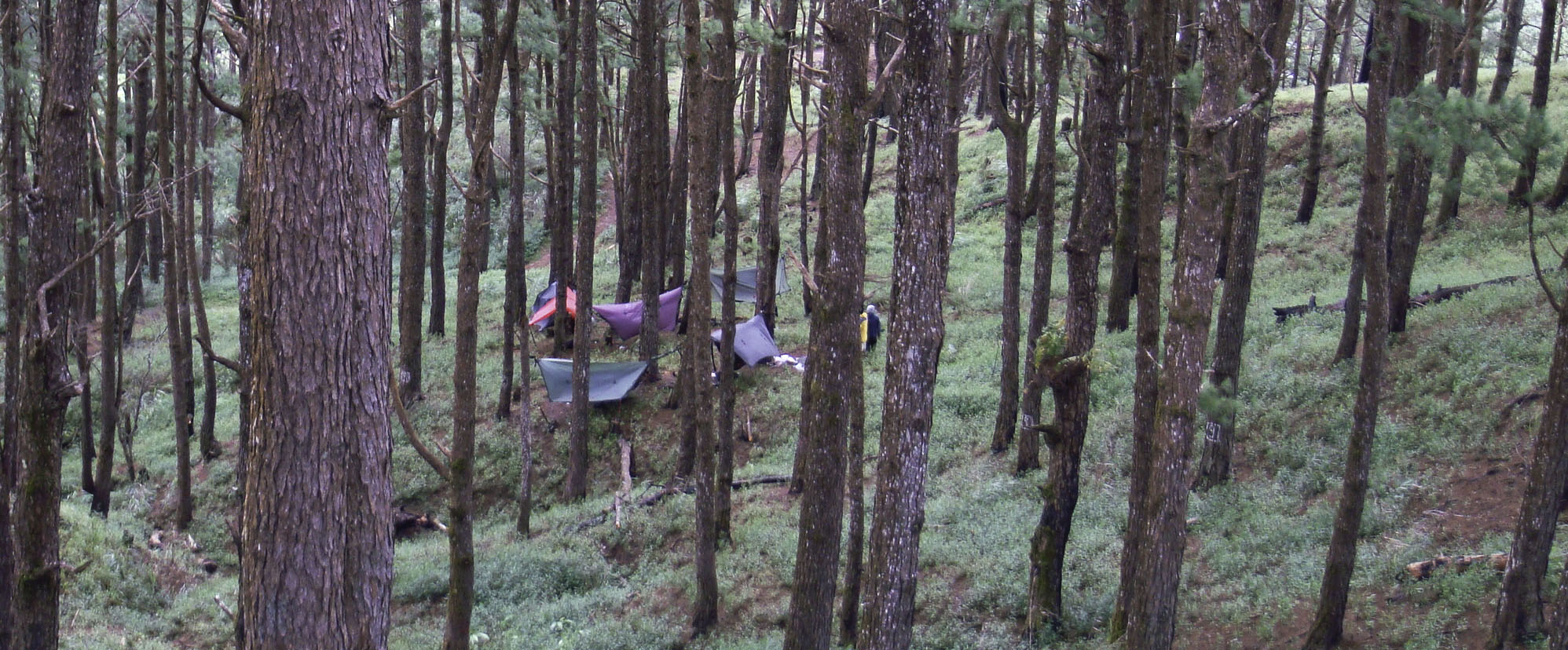 Pine Forest Hang 4 - Philippines