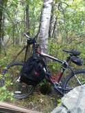 Bike Ride In The Aspen Forest