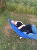 Mom Gracie by dangerous in Hammocks
