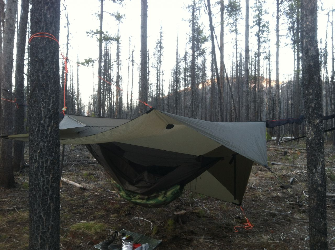 Hammock In A Burn Area
