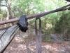 Eldorado's Warbonnet Blackbird