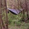 Bison Centre 06 by fest64 in Hammock Landscapes