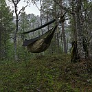 image by Harstad in Hammock Landscapes