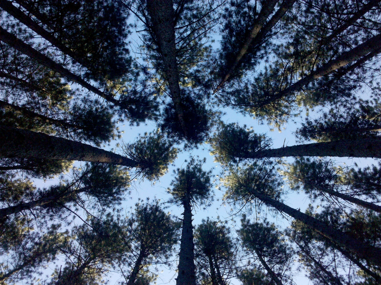 Looking Up From Hammock