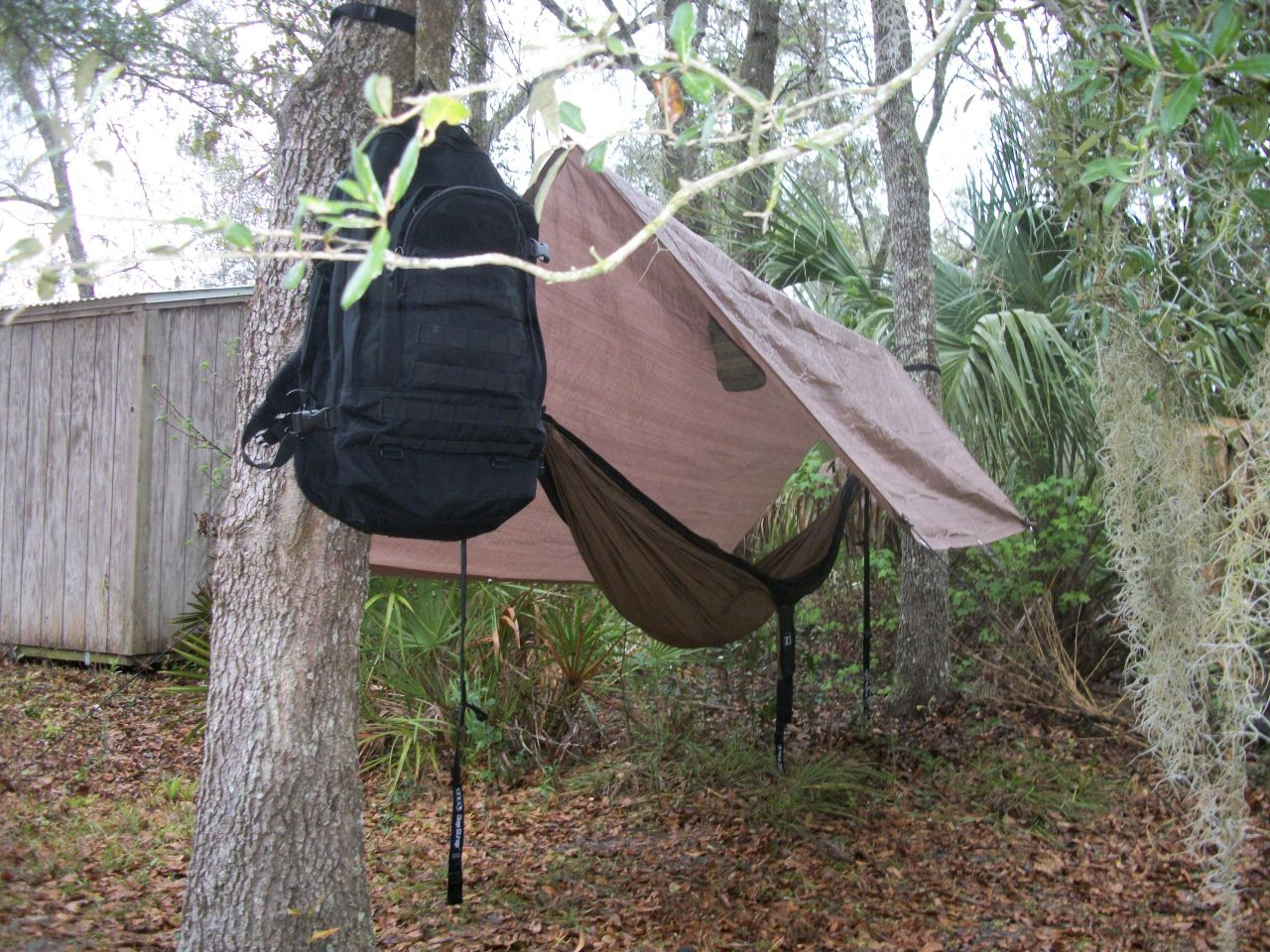 Hammock And El Cheapo Tarp