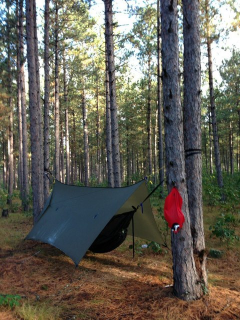 Hammocking In The Red Pines