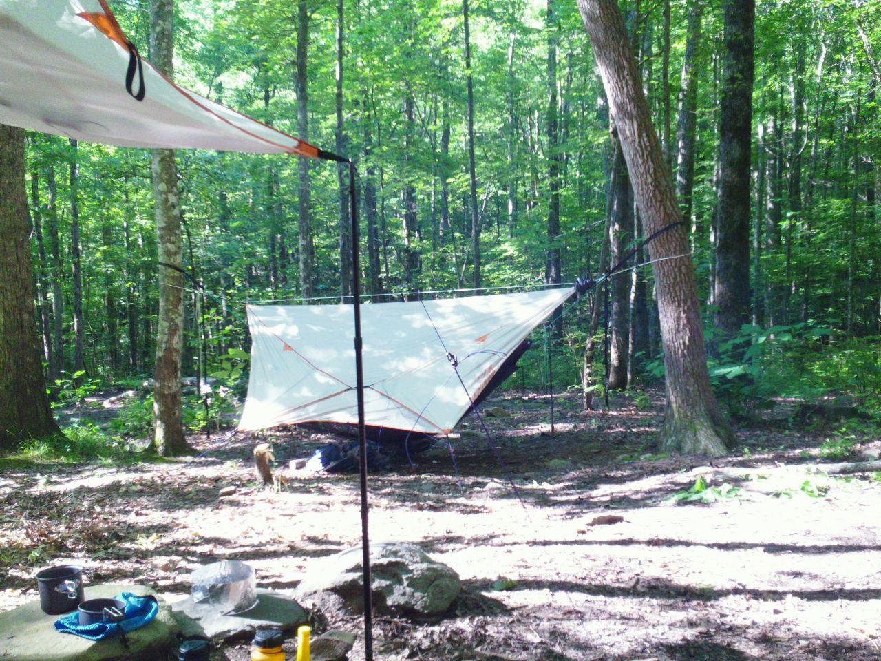 Site 95 Wolf Ridge Trail Gsmnp