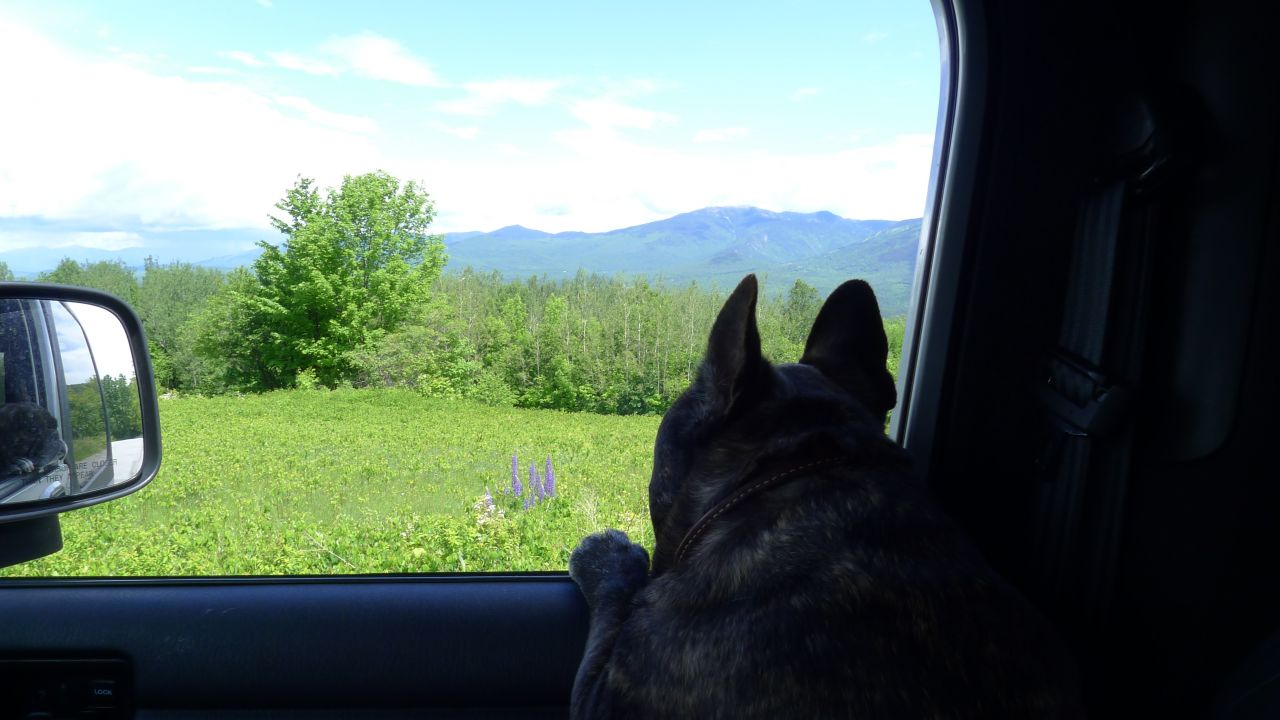 Tonka Viewing Lupines