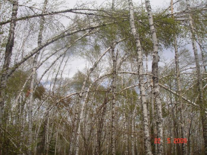 Storm Damage, Superior Hiking Trail May '09