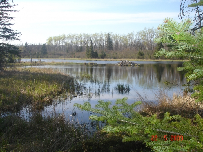 Leveaux Creek Pond, Sht May '09