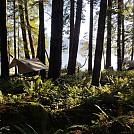 20181230 115148 by Gordzilla in Hammock Landscapes