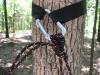 Speer webbing to buckle to biner to hugger