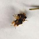 Bee test