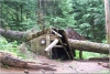 tree smashes emergency shelter
