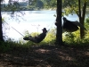 Blackies Fall Hang In Alabama