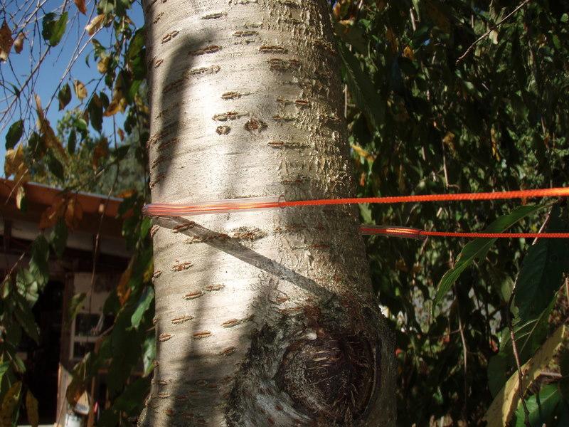 Oxygen Line Tree Guard
