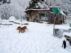 Snow Dogs by slowhike in Faces