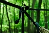 Double Layer Hammock And Suspension by Redoleary in Homemade gear
