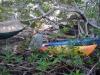 Fla.keys by fungus in Hammock Landscapes
