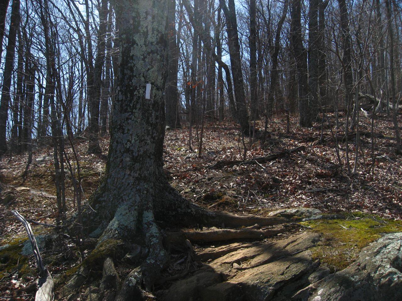 Appalachian Trail Hike