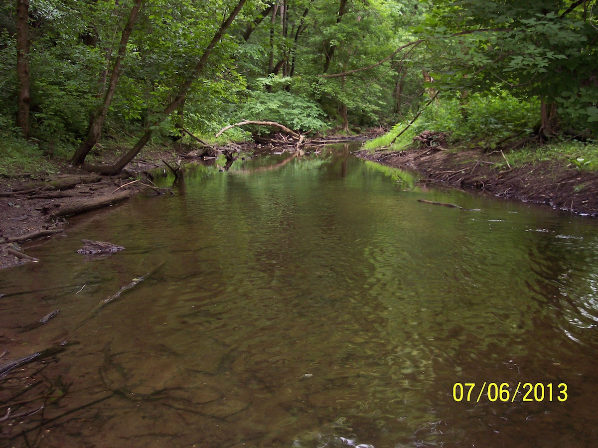 Mohican 1 - Clear Fork River Feeder Stream