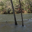 Swollen Clearfork River by Trail Runner in Hammock Landscapes
