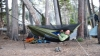 Hammock In Woods