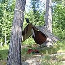 Quetico Provincial Park by unshavenman in Hammock Landscapes