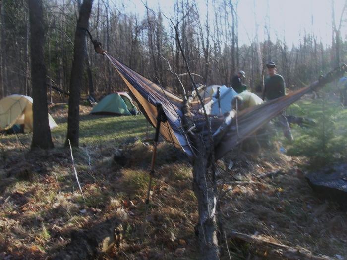 Tree On Kwpapke's Tent