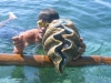 a diver and a giant clam