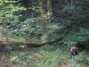 Cheddar And Trail