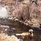 charlie in brook