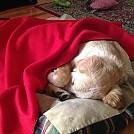 filou-sleeping