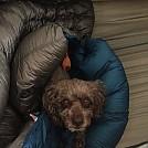 Jiminy loves hammock camping by mcspin50 in Hammocks