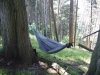 P1020376 by Lynx in Hammock Landscapes