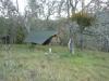 Henry Coe Sp by Lynx in Hammock Landscapes