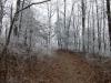 Winter 2010 by Dutch in Hammock Landscapes