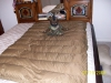 Brown Quilt by Dutch in Topside Insulation