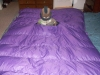 Purple Quilt by Dutch in Topside Insulation
