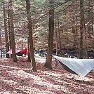 Stokes State Forest Hang by The Tree Frog in Hammock Landscapes