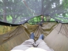 Dual Claytor/bridge Hammock by GrizzlyAdams in Homemade gear